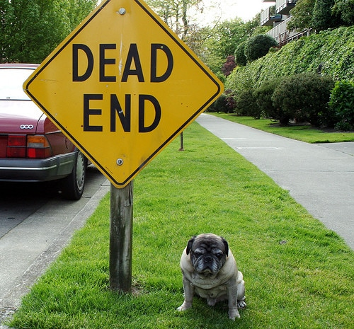dog with dead end sign
