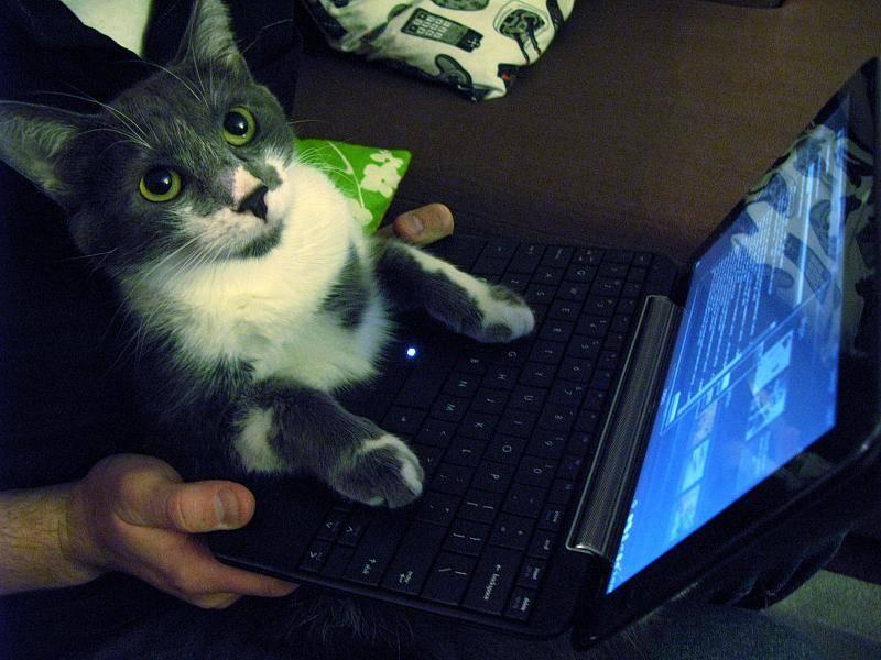 cat using netbook