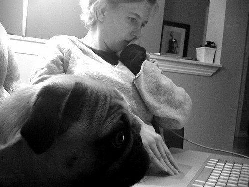 pug on computer