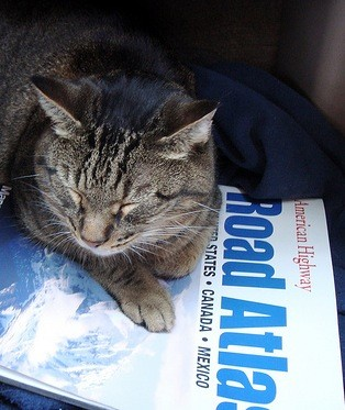cat sleeping on road atlas