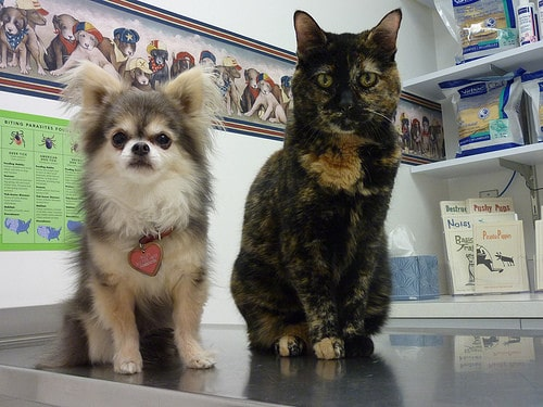 dog and cat at vet