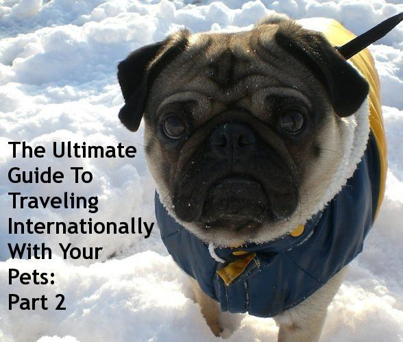 The Ultimate Guide To Traveling Internationally With Your Pets: Part 2