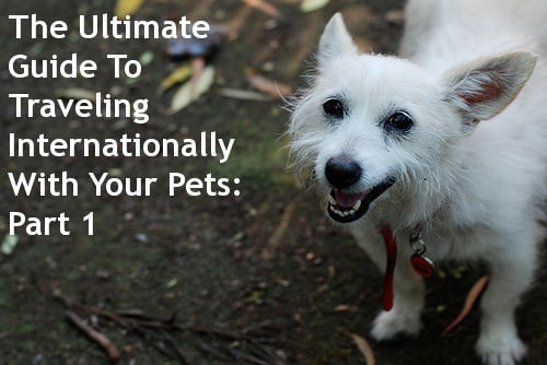 The Ultimate Guide To Traveling Internationally With Your Pets: Part 1