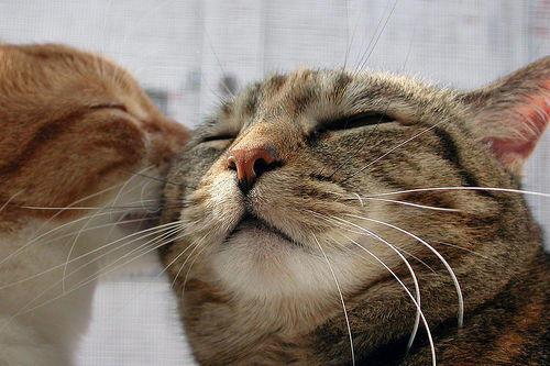 whispering cats