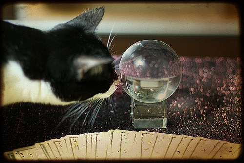 cat looking in crystal ball