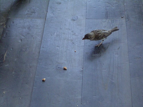 bird following breadcrumbs