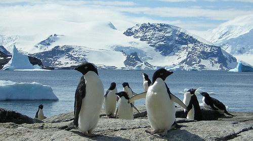 penguins in wild
