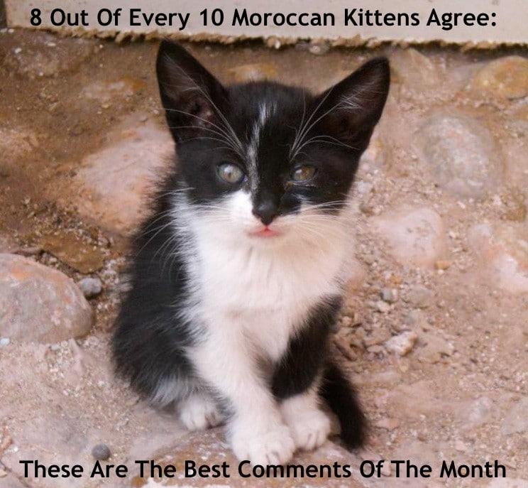 kitten in morocco