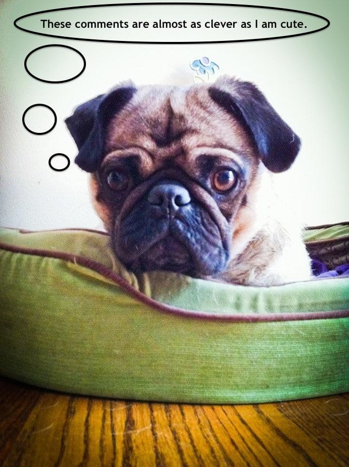 talking pug