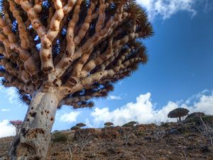 Is It Still Possible To Visit Socotra Island?